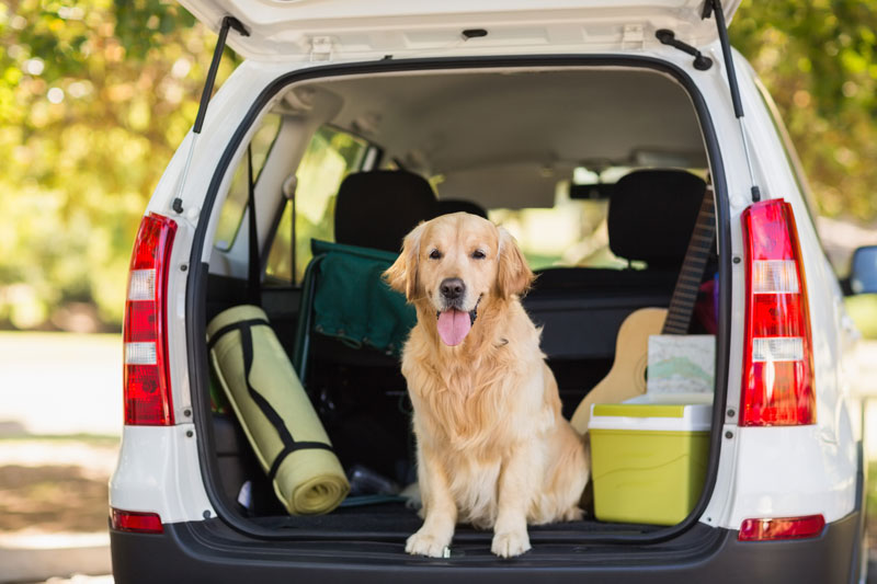 Keep Your Dog Safe on the Road with These Safety Tips