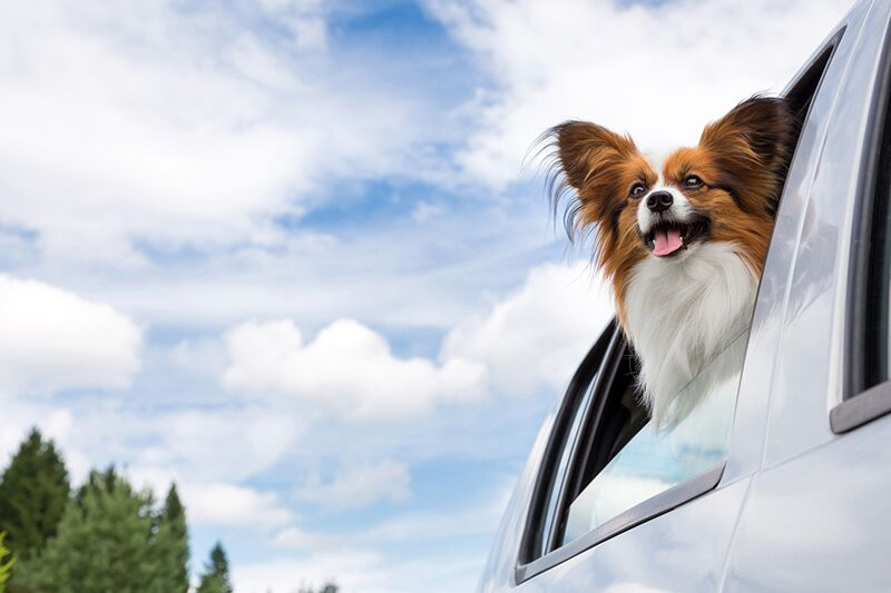Caring for Your Pets During an Emergency Evacuation