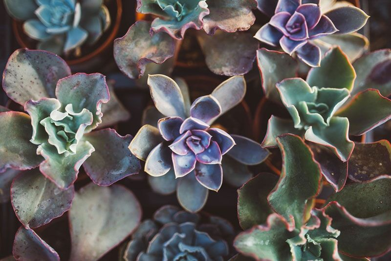 bunch of succulent plants