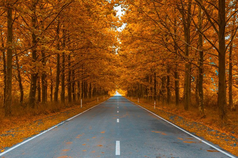 road surrounded by trees with golden leaves